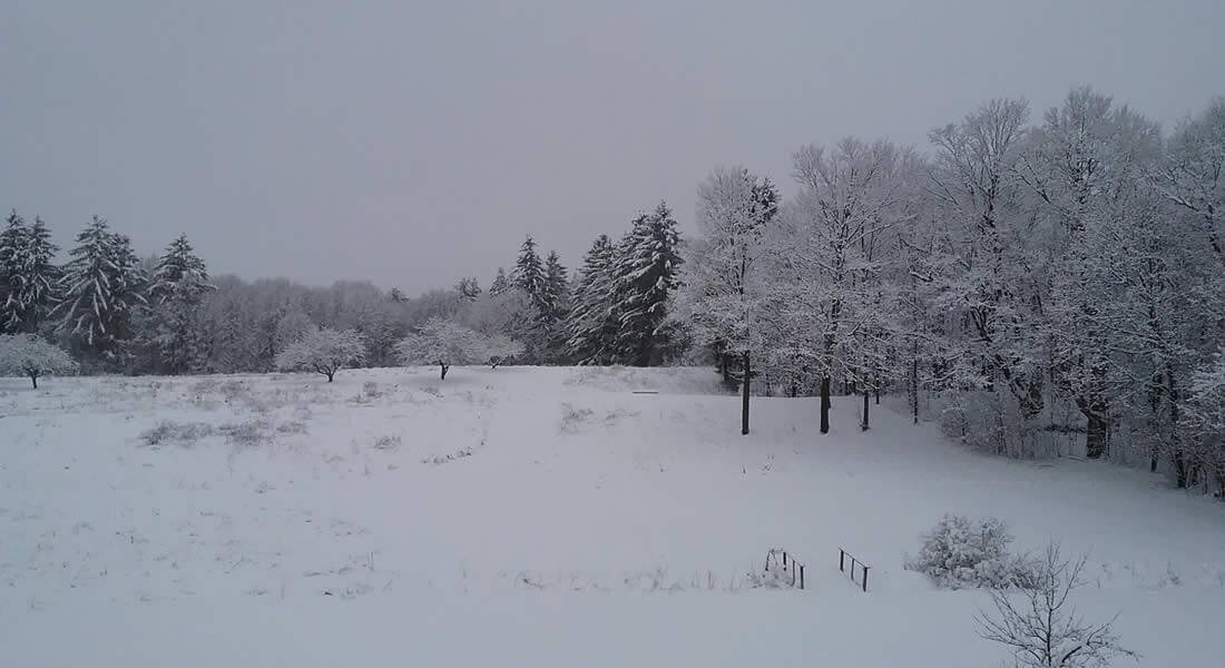 Open field covered in a blanket of white snow surrounded by snow covered trees and white cloudy skies