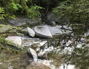 Close-up view of large rocks in a stream surrounded by green trees