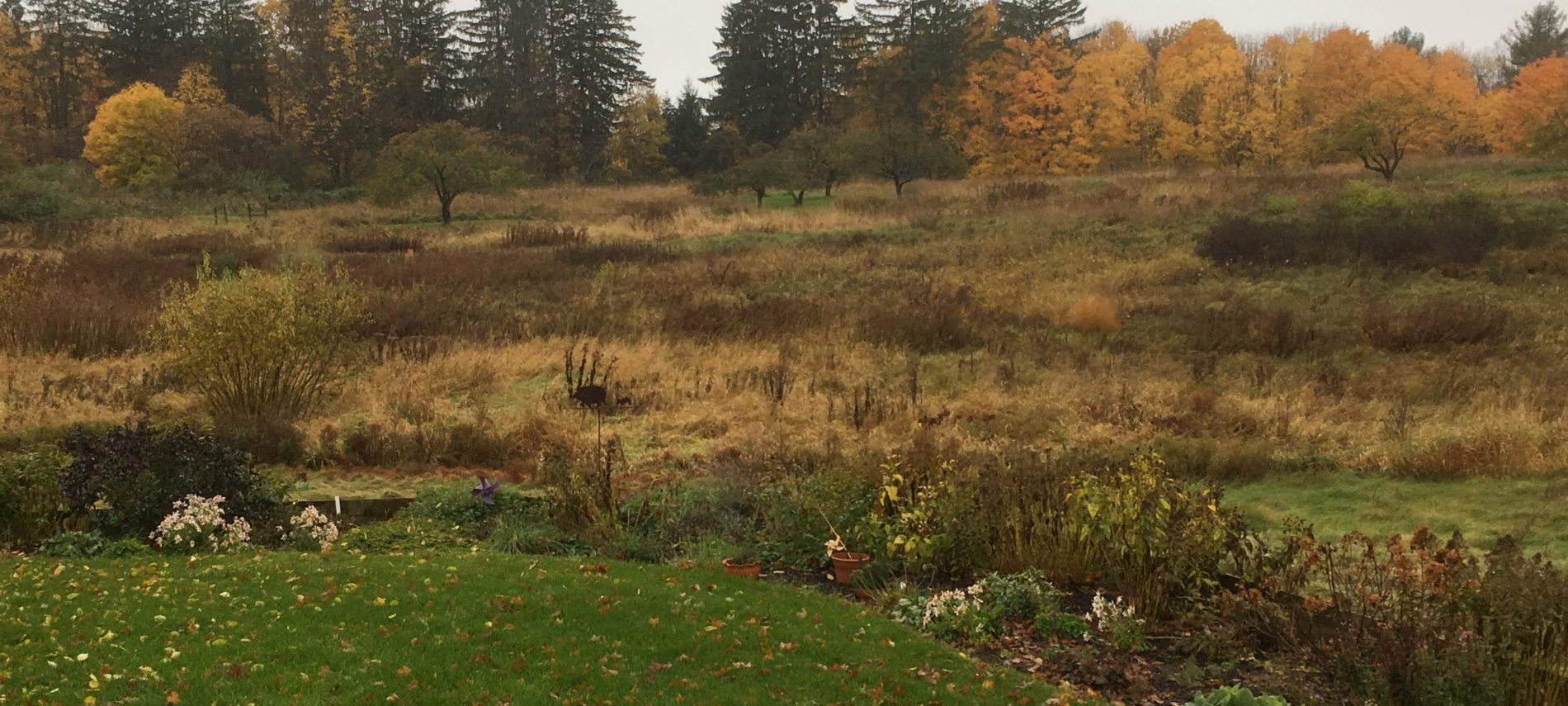 Autumn view of perennial garden and meadow in Vermont