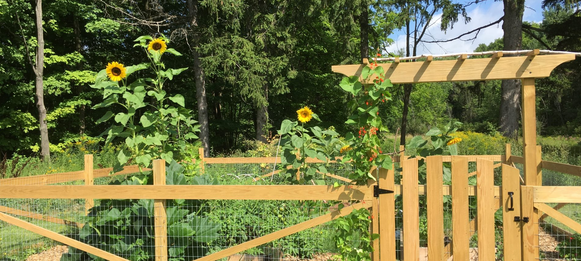 A pagoda style wood garden gate with sunflowers, and the woods beyond, on a sunny day.